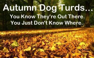 hidden-dog-turds